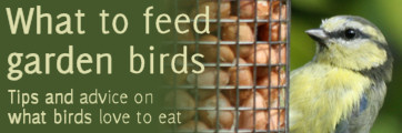 Garden birds: What to feed them